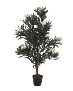 EUROPALMS 120 cm Oleanteri valkoisilla kukilla