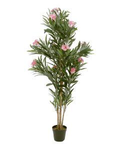 EUROPALMS 150 cm Oleanteri vaalenpunaisilla kukilla