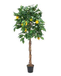EUROPALMS 180 cm Sitruunapuu hedelmillä