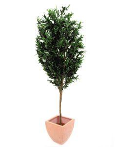 EUROPALMS 200cm Oliivipuu oljypuu oliiveilla