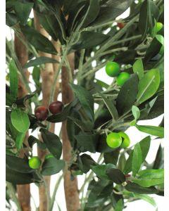 EUROPALMS 250 cm Oliivipuu kaksirunkoinen oliiveilla