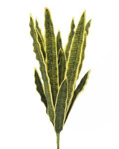 EUROPALMS 74 cm Anopinkieli vihreä-keltainen