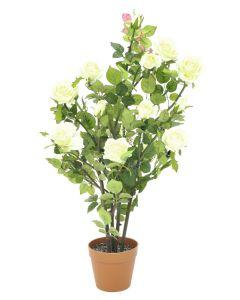 EUROPALMS 86 cm Ruusupensas kukkien väri kerma