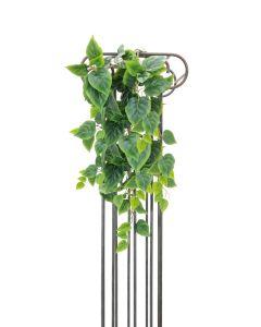 EUROPALMS 90 cm Herttaköynnösvehka vihreä