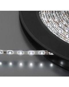 MONACOR LEDS-10MP/WS valkoinen led nauha-strip 24V
