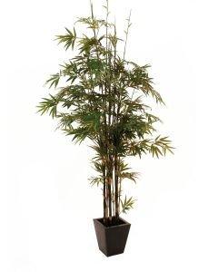 EUROPALMS 240cm Bambu mustilla tekorungoilla