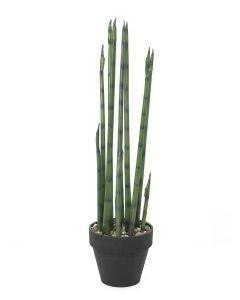 EUROPALMS 80cm Aloe Gigantti puutarhurin ruukussa
