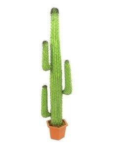 EUROPALMS 170cm Saguaro-kaktus, ns jättikaktus