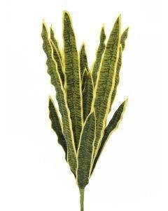 EUROPALMS 60cm Anopinkieli vihreä-keltainen