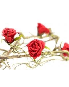 EUROPALMS 100cm Ruusuköynnös punainen