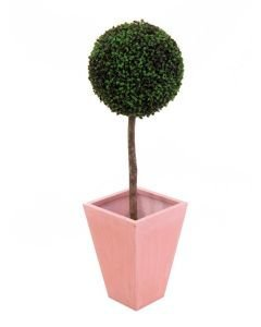 EUROPALMS 110cm Puksipuu pallon halkaisija 60cm