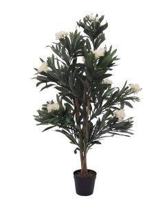 EUROPALMS 120cm Oleanteripuu valkoisilla kukilla