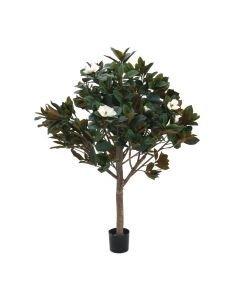 EUROPALMS 150cm Magnoliapuu
