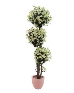 EUROPALMS 160cm Päivänkakkarapuu eli daisy tree