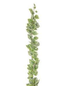 EUROPALMS 180cm Meloniköynnös vihreä-valkoinen