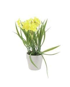 EUROPALMS 22cm Narsissi väri keltainen