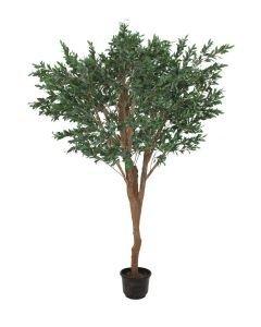 EUROPALMS 250cm Jättimäinen Olivipuu (öljypuu)
