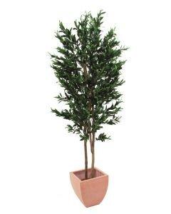 EUROPALMS 250cm Oliivipuu öljypuu oliiveilla