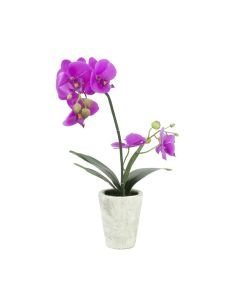 EUROPALMS 56cm Orkidea-asetelma väri purppura