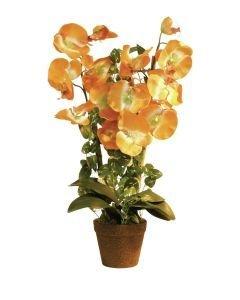 EUROPALMS 57cm Orkidea väri oranssi