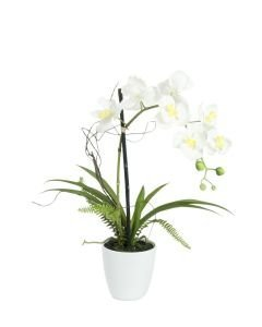 EUROPALMS 62cm Orkidea-asetelma väri valkoinen