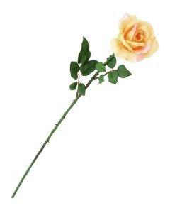 EUROPALMS 65cm Ruusu kermanvärinen