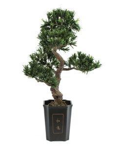 EUROPALMS 80cm Bonsai-Podocarpus deco-ruukussa