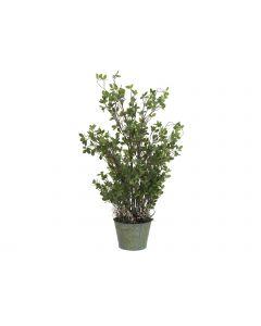 EUROPALMS 120 cm Ikivihreä pensas peltiruukussa