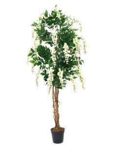 EUROPALMS 180cm Japaninsinisade valkoinen