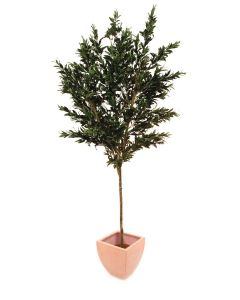EUROPALMS 250cm Oliivipuu oljypuu oliiveilla